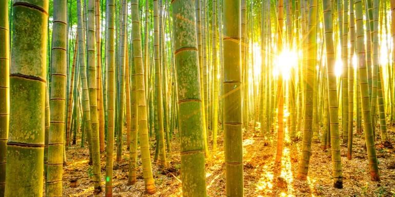 Ręczniki bambusowe – co warto o nich wiedzieć?